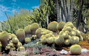 Plus de 250 jardins du monde à admirer