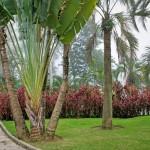 jardin-extrait-du-livre-jardins-de-jardiniers-phaidon_5464734