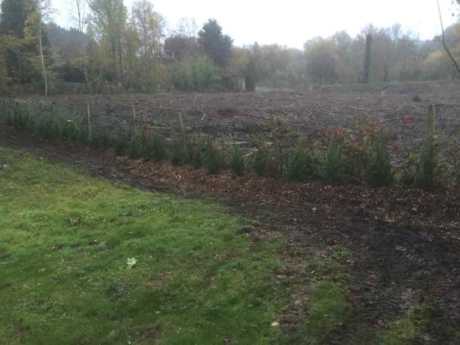 plantation haie leylandii 2001 yvelines